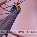 10 Summer Science Activities for Little Ones