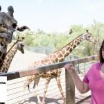 5 Questions With Teacher-Author Miss Giraffe