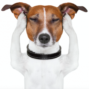 Teachers Problems as Told by Dogs: Teachers Pay Teachers