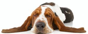 Teacher Problems as Told by Dogs: Teachers Pay Teachers