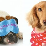 How You Can Get More Sleep This School Year (As Told By Dogs in Pajamas)
